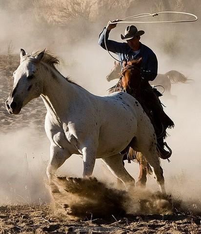ловят лошадей на западе